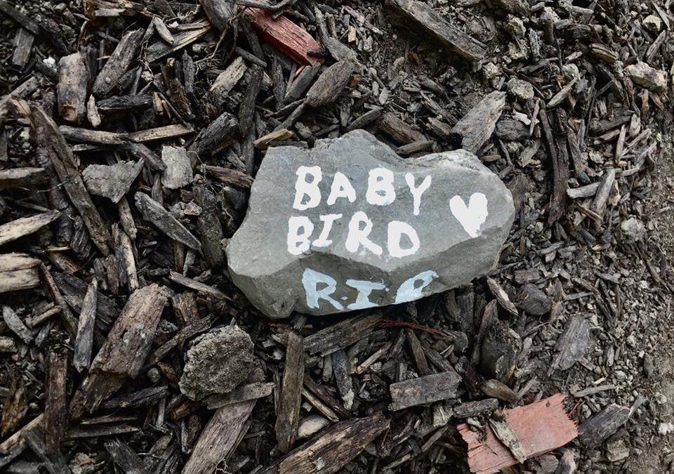 RIP Baby Bird by Danielle Onward